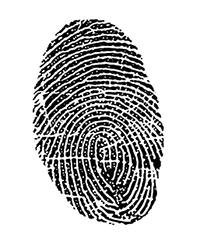 Adult Fingerprint