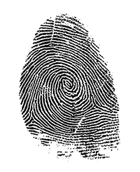 Young Adult Fingerprint